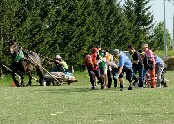 ばん馬と力比べ